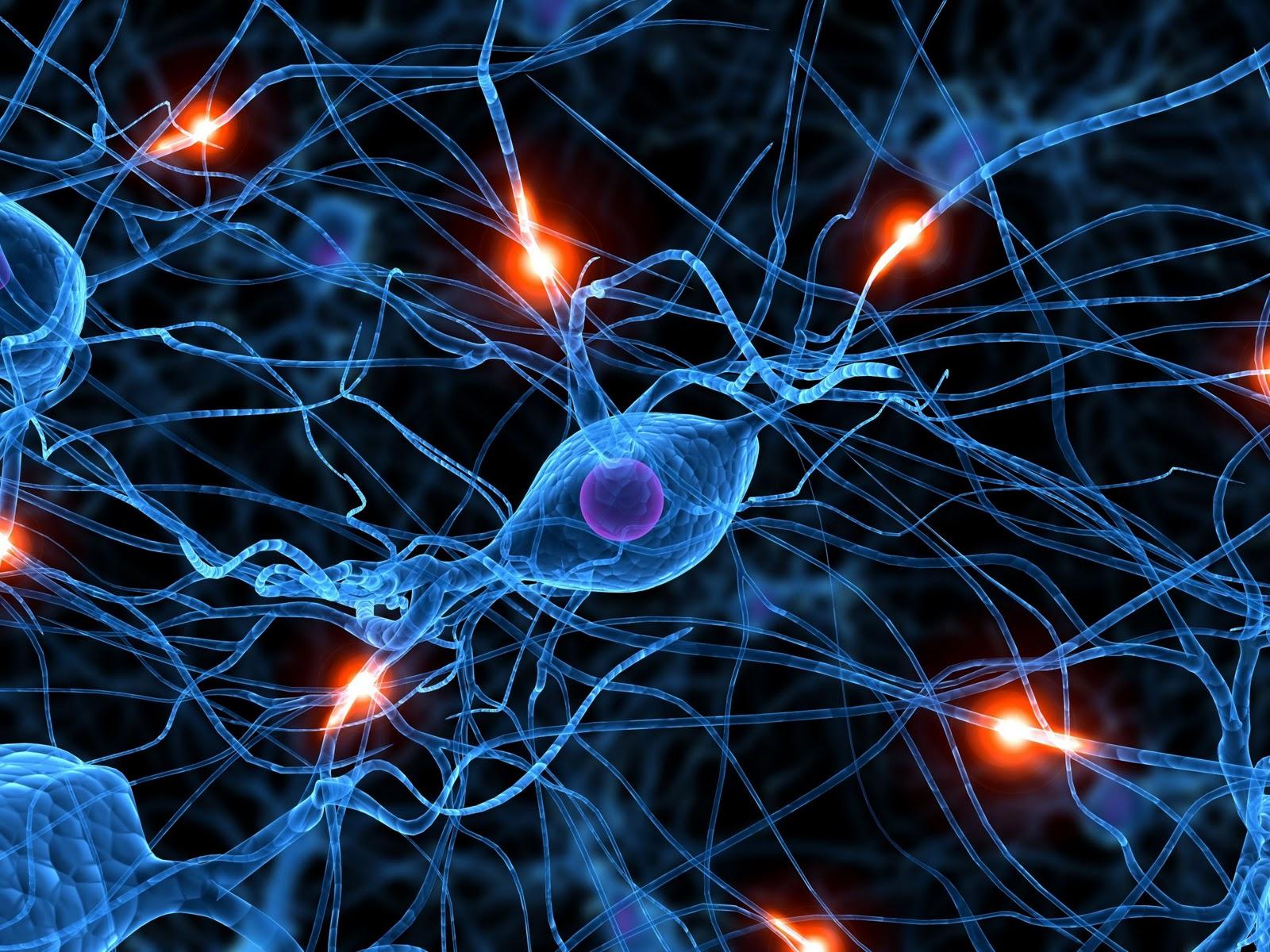 Aplicar el Neuromarketing en las ventas, el cerebro reptil, secretos, trucos, consejos prácticos