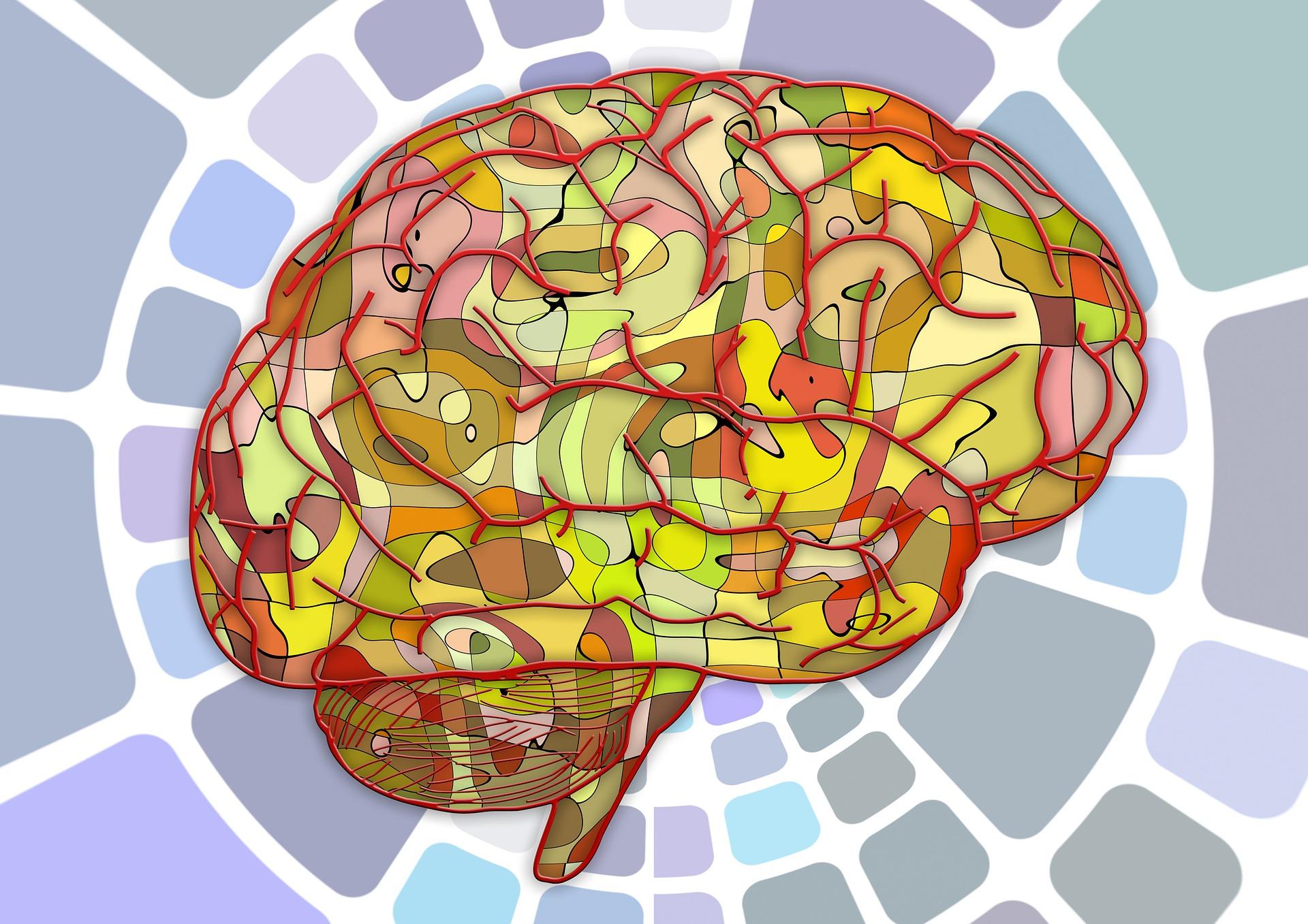 Productividad, ciencia y cerebro